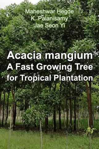 Acacia mangium  Willd. - A Fast Growing Tree for Tropical Plantation