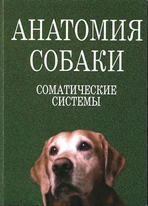 Анатомия собаки. Соматические системы