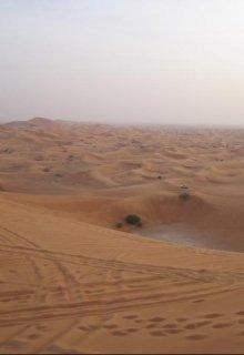 Бедуины: с верблюдов на тойоты