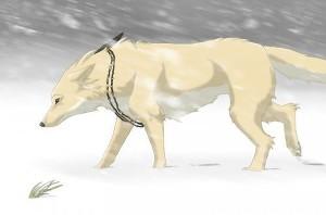 Белая волчица (СИ)