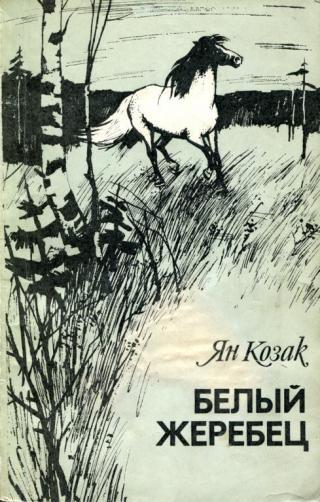 Белый жеребец