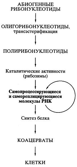 Биосинтез белков, мир РНК и происхождение жизни