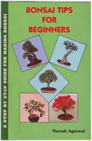 Bonsai Tips for Beginners