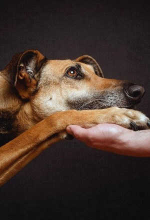 Бродячий пёс (СИ)