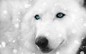 Бусинка и Снежная волчица (СИ)
