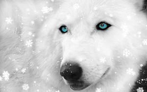 Бусинка и Снежная волчица(СИ)
