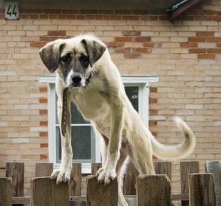 Человек собаке - друг... (СИ)