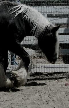 Черная лошадь с белой гривой(СИ)