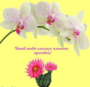 Чтоб тебе кактус вместо орхидеи!