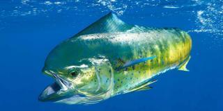 Чудовищные монстры и обаятельные обитатели морских глубин [calibre 2.85.1]