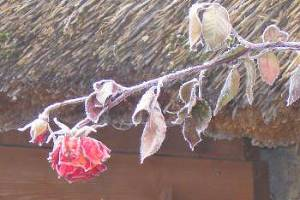 Цветы ненастья