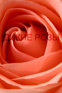 Дикие розы (СИ)