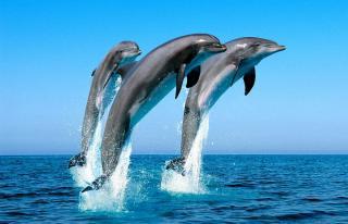 Эти удивительные дельфины [calibre 4.99.4]