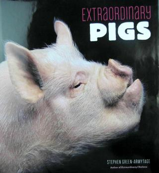 Extraordinary pigs