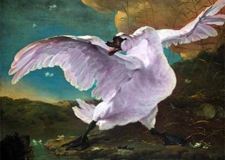 Фиолетовые лебеди