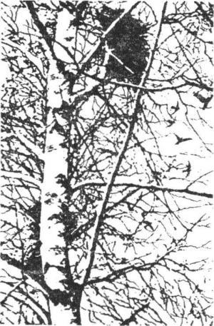 Гнездо над крыльцом