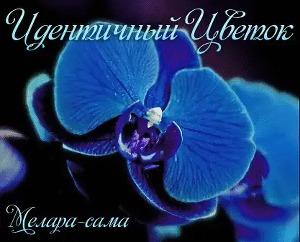 Идентичный цветок (СИ)