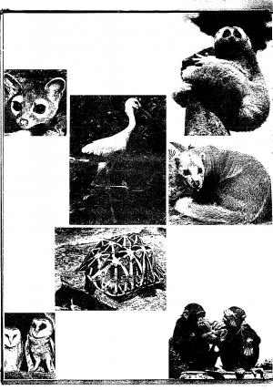 Island Zoo