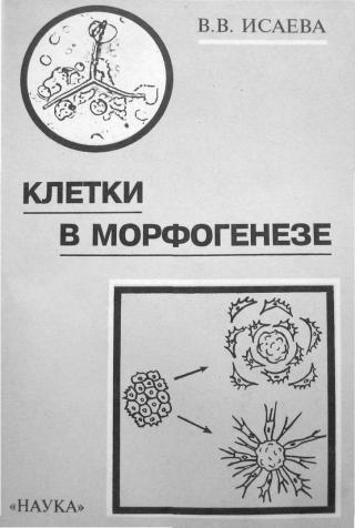 Клетки в морфогенезе