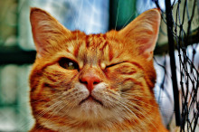 Кот-волонтёр