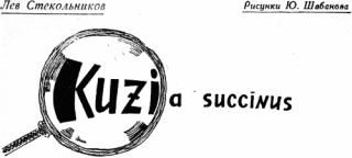 Kuzia succinus