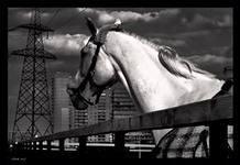 Лошадь в моем городе (СИ)