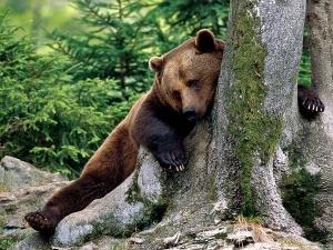 Медвежья обида (СИ)