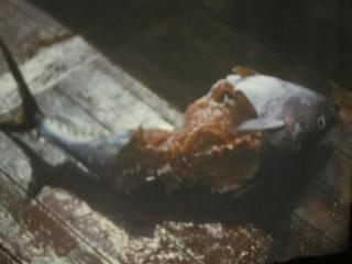 Морские телята [calibre 3.26.1]