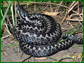 Немного о змеях...