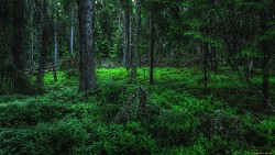 Ночь в лесу (СИ)
