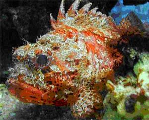 Обитатели Черного моря-красавицы и чудовища [calibre 2.85.1]