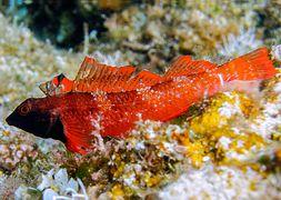 Обитатели морей – красавицы и чудовища [calibre 2.78.0]