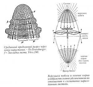 Образ человека как основа искусства врачевания - Том I. Анатомия и физиология