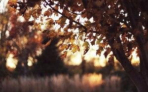 Осень (СИ)