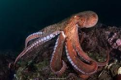 Подводные многорукие чудовища (СИ)