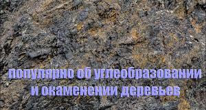 Популярно об углеобразовании и окаменении деревьев (СИ)