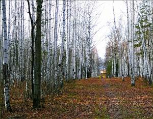 Поздняя Осень (Прохладой воздух опьянен...) (СИ)