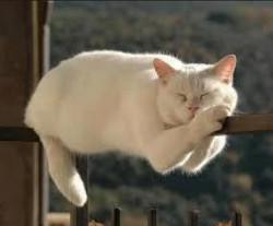 Про сантехника Васю и кота без сапог