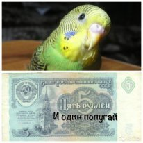 Пять рублей и один попугай (СИ)