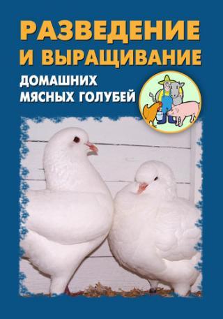 Разведение и выращивание домашних мясных голубей