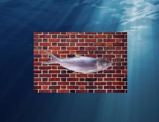 Рыба разумная (СИ)