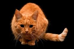 Рыжий кот в виде кармы (СИ)