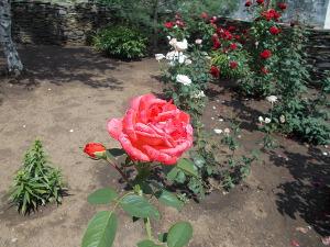 Садовник и роза (СИ)