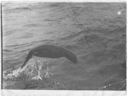 Сага о морских котиках (СИ)