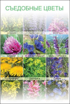 Съедобные цветы (СИ)