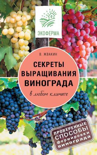 Секреты выращивания винограда в любом климате. Проверенные способы формировки винограда