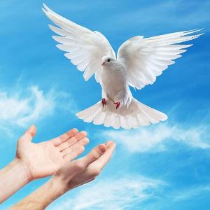 Сердце голубя (СИ)