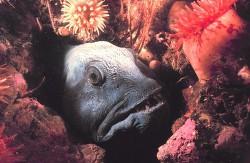 Снова об удивительных рыбах и животных