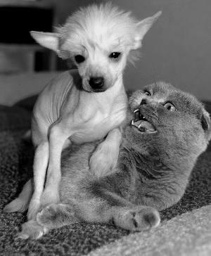 Собачка и пол котика (СИ)
