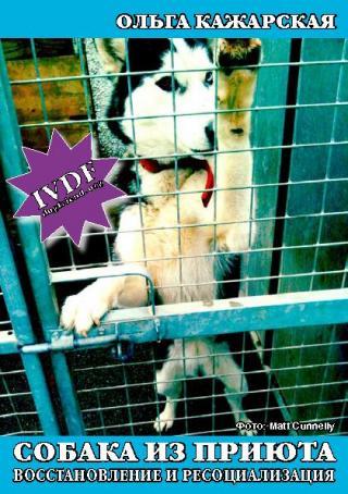 Собака из приюта. Восстановление и ресоциализация